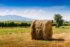 Tas de foin et cyprès en Toscane, Italie Photo stock
