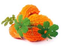 Tas de melon ou de momordica amer avec des feuilles d'isolement sur le fond blanc Photos stock