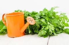 Tas de persil frais cru vert et de pot d'arrosage orange en métal à coté image libre de droits