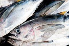 Tas de thon au marché Photographie stock