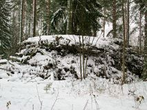 Tas des branches d'arbre coupées dans une forêt d'hiver Photos libres de droits