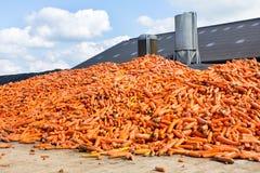 Tas des carottes oranges se trouvant à la ferme photographie stock