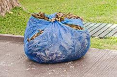 Tas des feuilles sèches Photos libres de droits