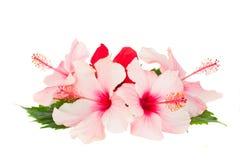 Tas des fleurs de ketmie Photos stock
