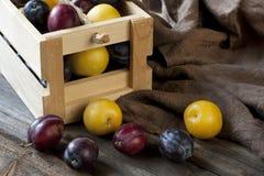 Tas des prunes colorées douces mûres Images stock