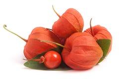 Tas des tomates de cosse ou du physalis avec la feuille d'isolement sur le fond blanc Image libre de droits