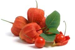 Tas des tomates de cosse ou du physalis avec la feuille d'isolement sur le fond blanc Images stock
