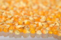 Tas du maïs sec utilisé pour faire le maïs éclaté photos stock