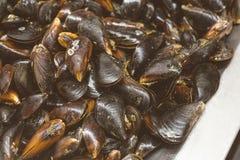 Tas en gros plan des moules fraîches crues sur le compteur à la poissonnerie locale Tas de mollusque nutritif de mollusques et cr images stock