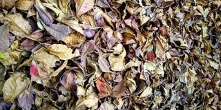 Tas sec de feuilles d'arbre d'amande indien photos libres de droits