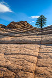 Tasca bianca, Arizona, U.S.A. Fotografie Stock Libere da Diritti