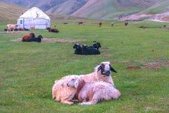 Tash Rabat Caravanserai 11 stock images