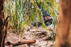 Tasmaanse Duivel die in de Wildernis lopen Stock Fotografie