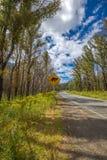 Tasmaanse Duivel die teken kruisen Stock Fotografie