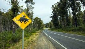 Tasmaanse duivel die verkeersteken kruisen stock foto