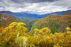 Tasmaanse Wildernis Stock Afbeeldingen