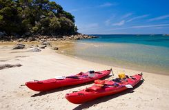 tasman abel kayaking Arkivbild