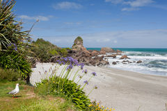 Tasman Sea at West Coast of South Island of NZ Stock Images
