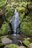 tasman vattenfall för abel nationalpark Arkivbild