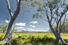 Tasmania Royalty Free Stock Photo