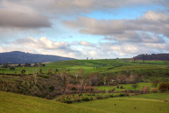 Tasmania farmland Royalty Free Stock Image