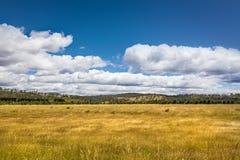 Tasmania Landscape Royalty Free Stock Images