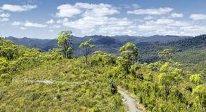 Tasmania rain forest Stock Image