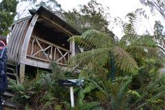 Tasmania treetop wiejski dom zdjęcia stock
