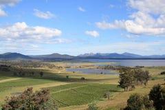 tasmania vingårdar Arkivbilder