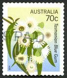 Tasmanian Blue Gum Australian Postage Stamp. AUSTRALIA - CIRCA 2014: A used postage stamp from Australia, depicting an illustration of a Tasmnian Blue Gum Royalty Free Stock Photography
