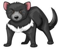 Tasmanian devil with black fur. Illustration Stock Photo