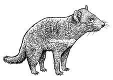 tasmanian devil illustration, drawing, engraving, ink, line art, vector  vector illustration