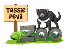 Tasmanian devil in the zoo. Illustration Stock Photos