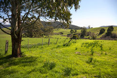 Tasmanian farmland. Lush green farmland in Tasmania, Australia Stock Images