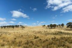 Tasmanian landskap Arkivfoton