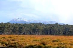Tasmanian landskap Royaltyfri Bild