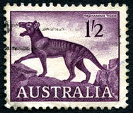Tasmanian Tiger Australian Postage Stamp. AUSTRALIA - CIRCA 1961: A used postage stamp from Australia, depicting an illustration of the now extinct Tasmanian stock images