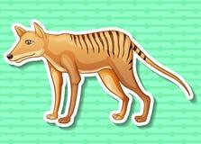 Tasmanian tiger Stock Photography