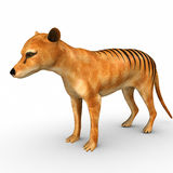 Tasmanian Tiger vector illustration