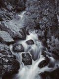 Tasmanian vattenfall Arkivfoto