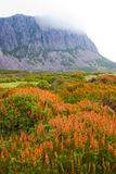 Tasmanian Wilderness Stock Photos