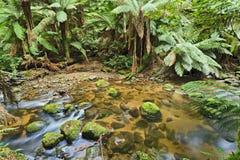Tasmanien Columba Creek horizontal stockfoto