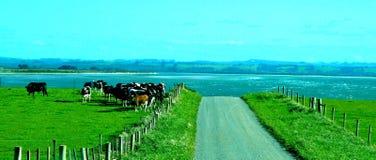 Tasmanien Farmlamd Royaltyfria Foton