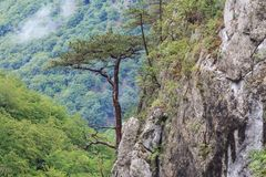 Tasnei峡谷,罗马尼亚 免版税库存照片