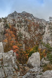 Tasnei峡谷,罗马尼亚 库存图片
