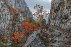 Tasnei峡谷 库存图片