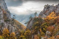 Tasnei峡谷,罗马尼亚 图库摄影