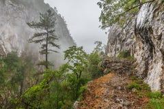 Tasnei Gorge stock photography