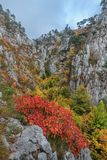 Tasnei Gorge, Romania Royalty Free Stock Photography
