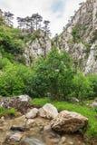 Tasnei Gorge, Romania Stock Photos
